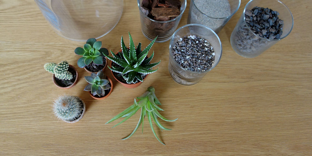 diy mini terrarium kakteen im glas unhyped. Black Bedroom Furniture Sets. Home Design Ideas