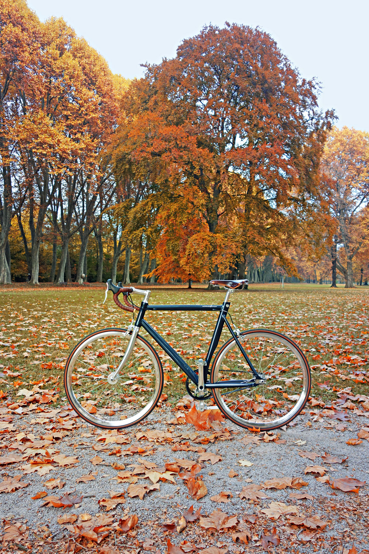 Schindelhauer-Siegfried-Road-Test-Review-Urban-Race-Bike-Singelspeed-Design-6
