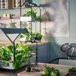 Für einen grüneren Alltag: Neues Hydrokultursystem von Ikea