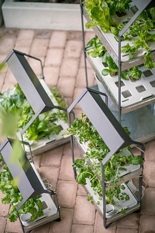 Ikea-Hydrokultur-System-Anzucht-Anbau-Kraeuter-Pflanzen-LED-6